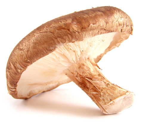 ... Shiitake Mushroom Powder | Medical Mushrooms | UK Super Food Supplier