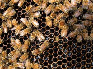 Bee-hub