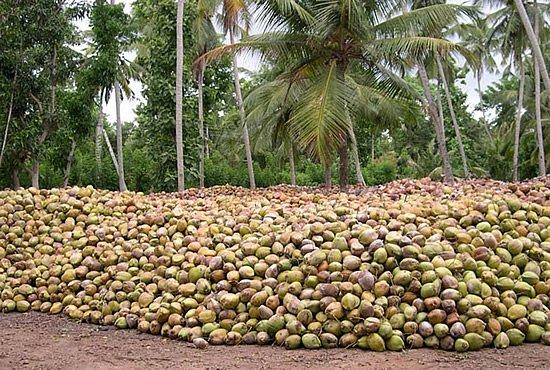 Coconut-pile