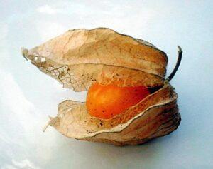 Golden-Inca-Berry