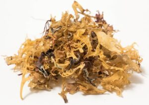 Irish Moss Seaweed