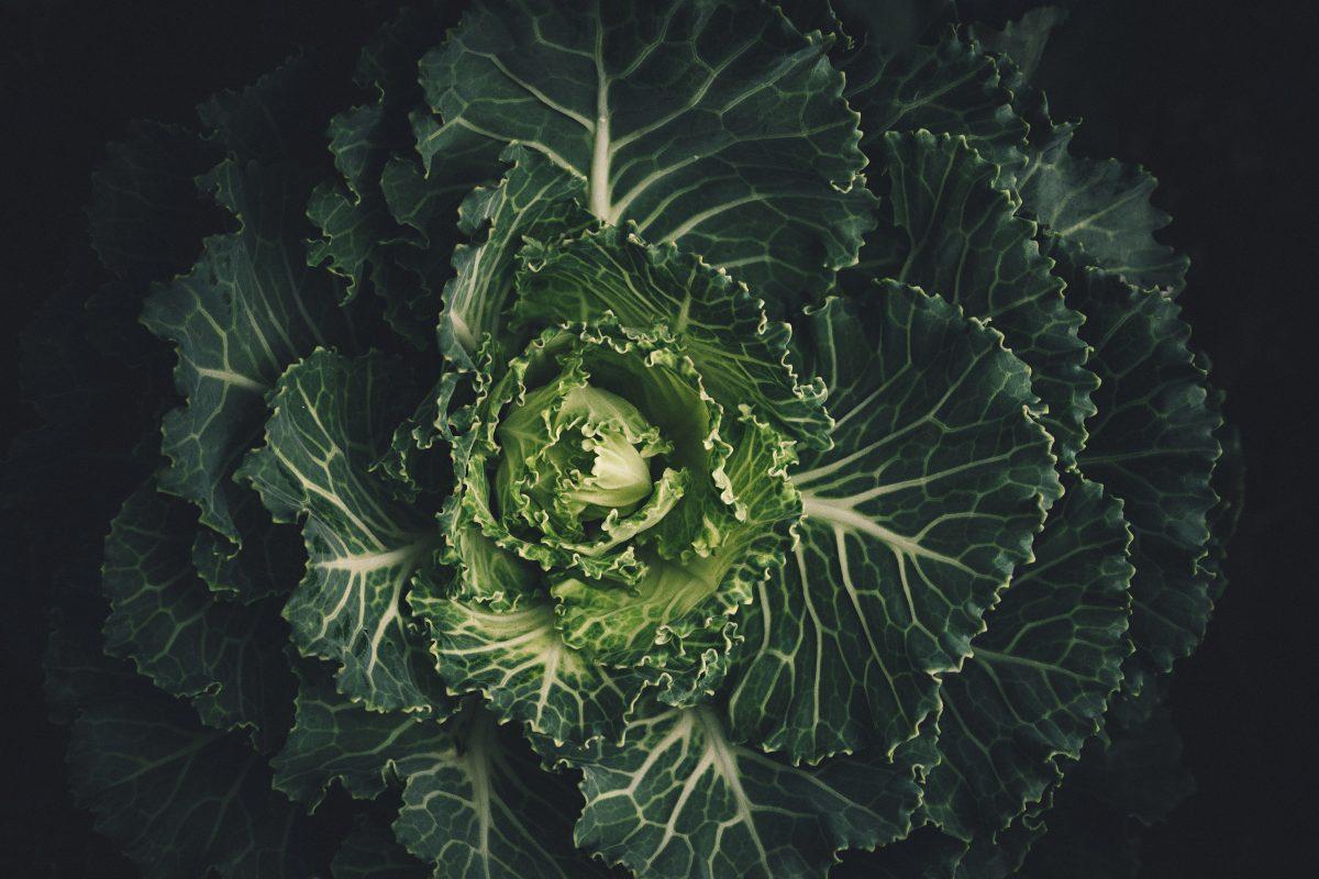 cabbage-leaves-lettuce