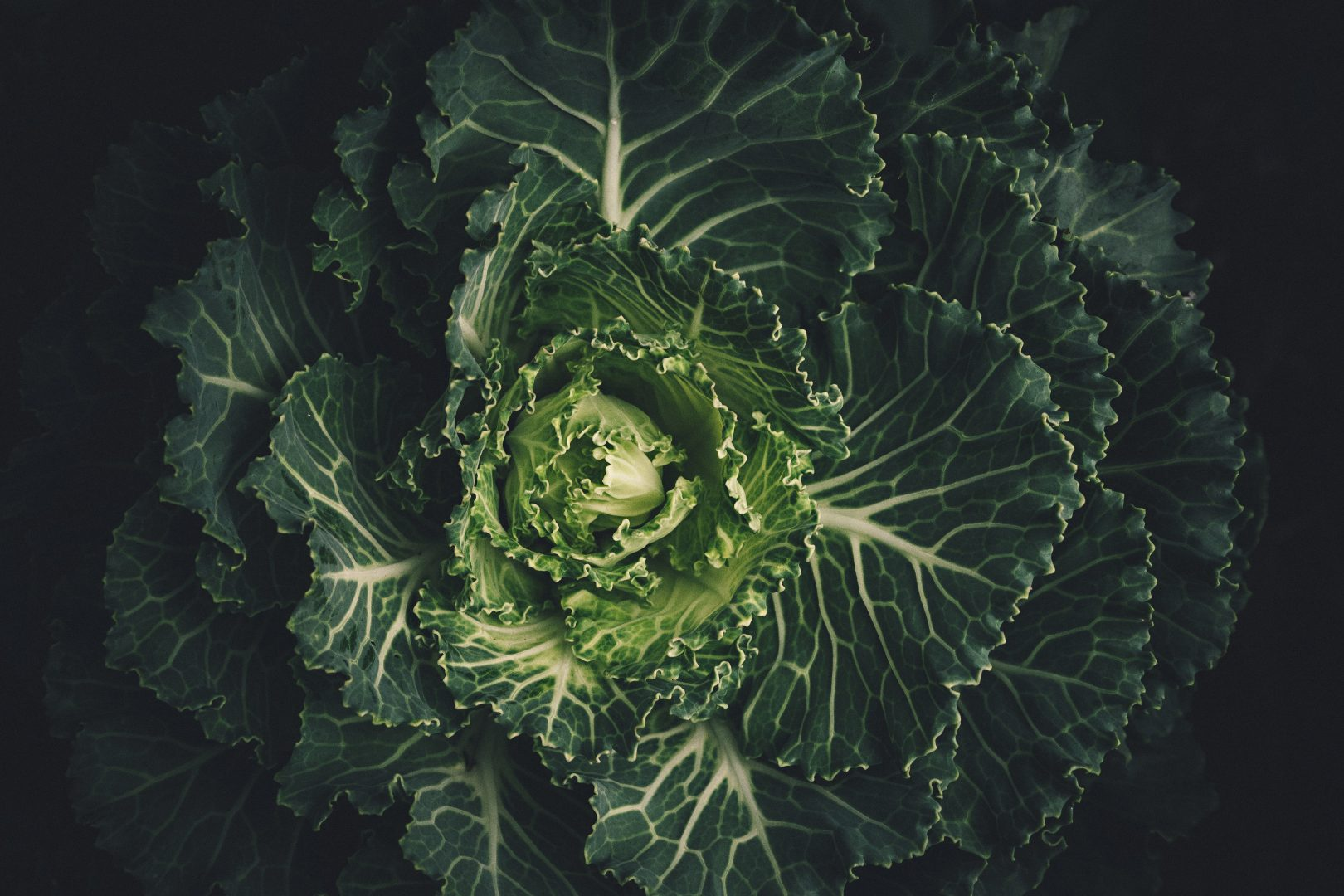 cabbage-leaves-lettuce